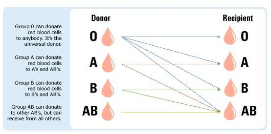 How To Know Your Blood Type? - Ways To Be Sure