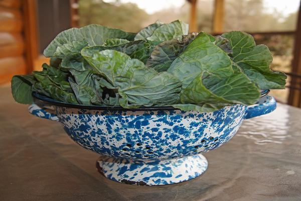 leafy green for enhancing bone strength