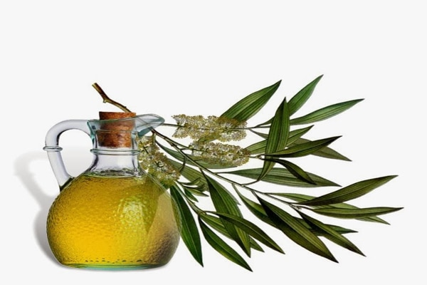 tea tree oil for fungal infection such as toe nail fungus